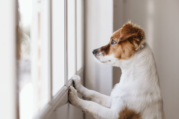 12 First Time Dog Owner Mistakes to Avoid 1