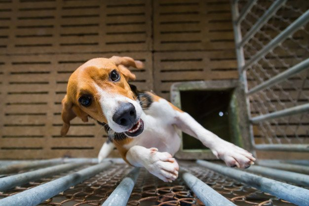 crate-training-for-dogs