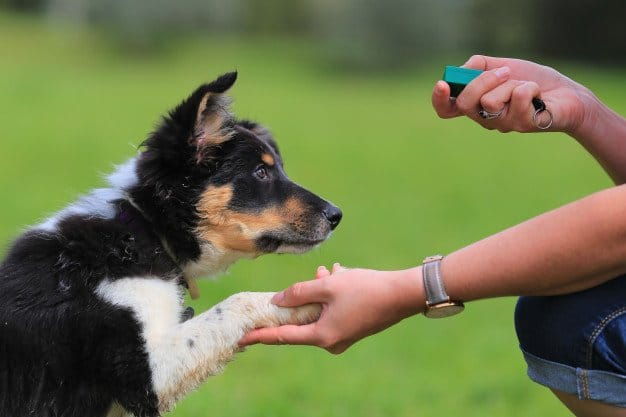clicker-training-for-dogs