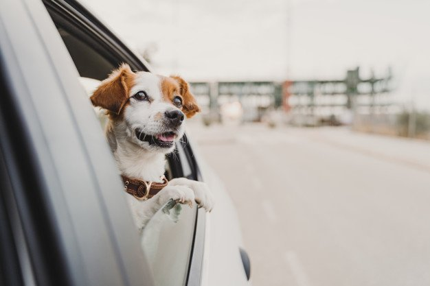 dog-anxiety-in-car-rides