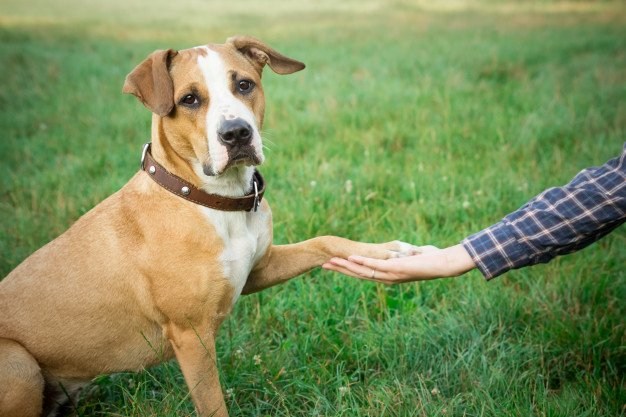 symptoms-of-separation-anxiety-in-dogs