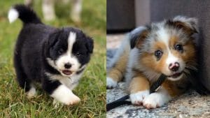 Top 10 Most Obedient Dogs: It Is All About Fur & Four Legs